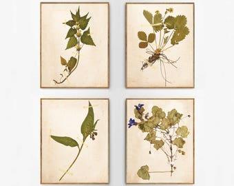 Antique Flower Print Set, Vintage Foliage Set, Leaf Prints, Farmhouse Decor, Pressed Foliage Downloadable Prints,  Print Set of 4