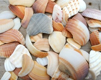 Sea Shell Fragments, Greek Sea Shells, Shell Decoration, Shell Craft Supplies, Embellishments