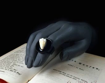 Adjustable oddity real human tooth fingerring on black base. Molar Ring sealed in gloss lacquer. Taxidermy jewelry.