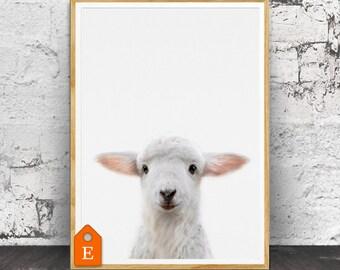 Lamb Print, Nursery Lamb, Nursery Animals, Nursery Animal Print, Cute Baby Lamb, Lamb Wall Art, Nursery Wall Art, Nursery Printable, Lamb