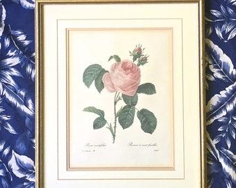 """Vintage 1800's Framed Botanical Rose Print - 15 3/4"""" x 19"""""""