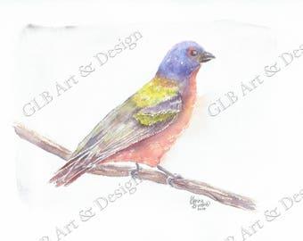 Painted bunting, bird lover gift, bird stationery, blank note cards, painted bunting bird, bird gift, bird painting, watercolor note cards