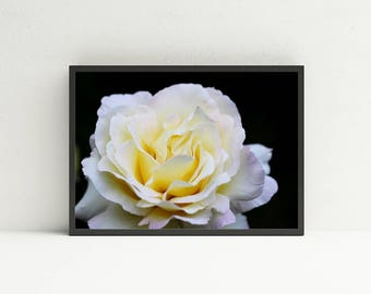 White Rose Wall Art - Floral Printable Wall Art - Digital Art Download - Flower Wall Art - Instant Download - Garden Wall Art