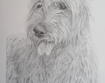 "Pencil Drawing Irish Wolfhound 11,7 x 8,3"" Original Drawing / ArtbySandraZereike"