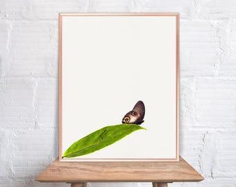 Butterfly wall art / Butterfly home decor / Butterfly Print / Butterfly on green leaf / Butterfly Art / Butterfly Wall Decor #41