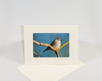 Chipping Sparrow - Folded photo frame card