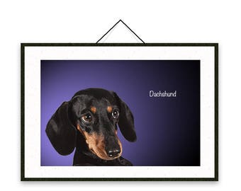 Dachshund - Dog breed poster, wall sticker, nursery decor, wall print, nursery print, shabby print | Tropparoba - 100% made in Italy