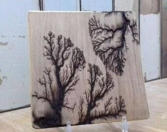 Handcrafted Burnt Wood, Lichtenberg Figure, Captured Lightning, Electron tree, frozen lightning