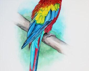 Scarlet Macaw Parrot Print