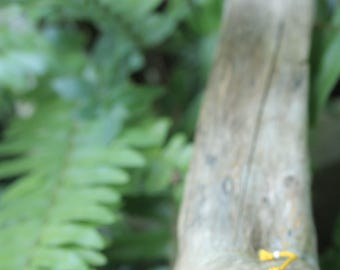 Amazon seed amber bracelet