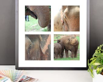 "Framed Wildlife Photography ""Elephant Photo Quartet"" by Malinee Ganahl.  Lustre Print. Asian Elephants in Four Color Photographs.  Closeups."
