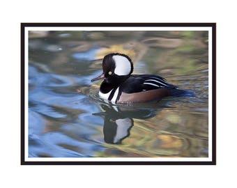 Common Merganser Duck Note Card