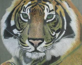 Sticker - Tiger - Original Drawing
