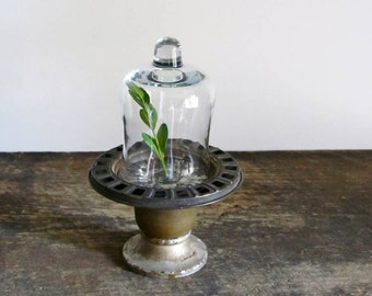 Miniature Glass Cloche Display
