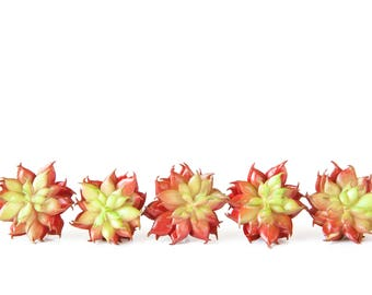 Fake Succulents - Set of 5 Artificial Succulents in Accented Red - Fake Chicks and Hens - Faux Succulents - ITEM 0332