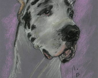 Harlequin Great Dane Original Dog Art Pastel Drawing Framed and Matted by Cori Solomon