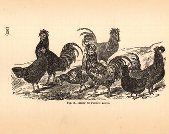 GROUP of FRENCH FOWLS Hens and Roosters 1889 Steel Engraving