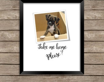 Take Me Home, Please? Download Print, a cute puppy in a box, adorable addition to any home decor
