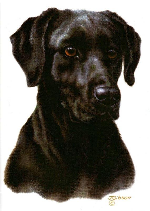 Top Labrador Black Adorable Dog - il_570xN  Picture_188284  .jpg