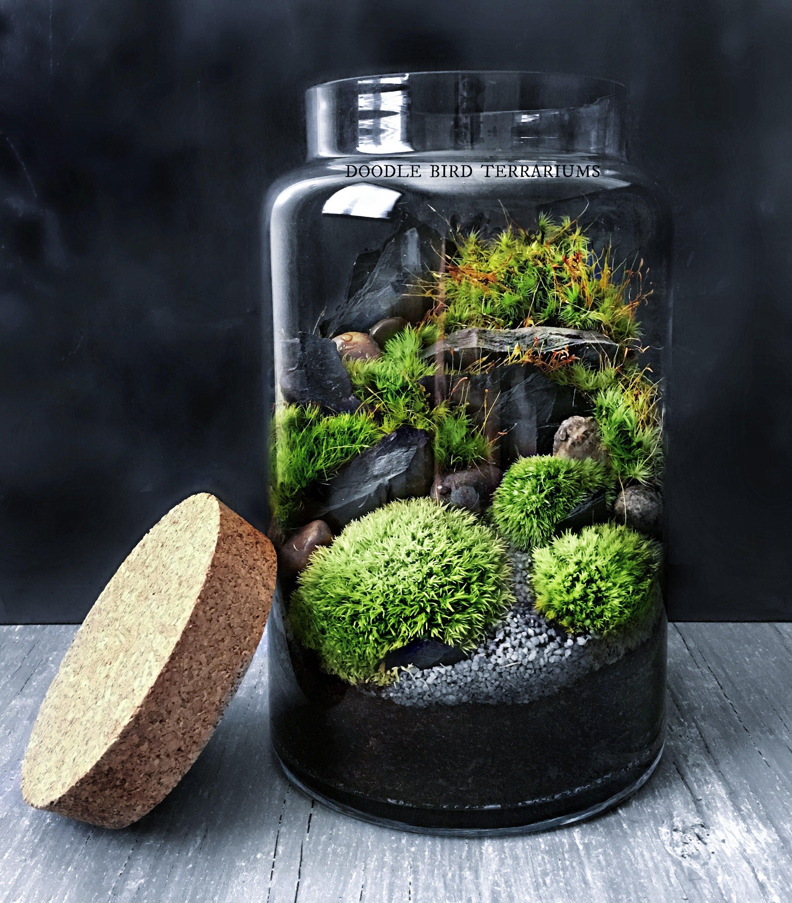 woodland moss and fern terrarium in large glass jar. Black Bedroom Furniture Sets. Home Design Ideas
