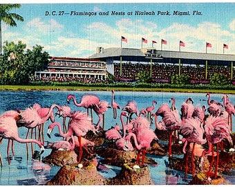 Vintage Florida Postcard - Flamingos nesting at Hialeah Park Racetrack (Unused)