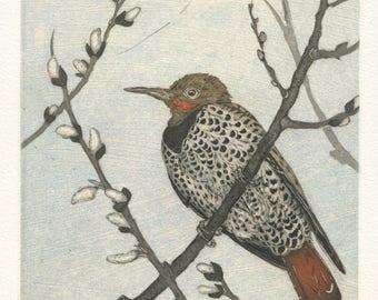 Northern Flicker, Original Fine Art Etching