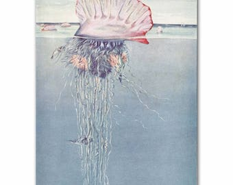 "Jellyfish Art, Jellyfish Print, 1930s Ocean Art --- ""Portuguese Man-of-War"" No. 310"