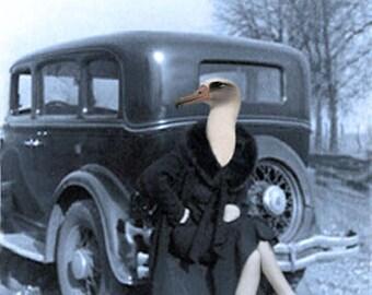Loretta - Vintage 5x7 Print - Anthropomorphic - Altered Photo - Photo Collage Art - Gift Idea - Seagull - Whimsical Art - Vintage Bird
