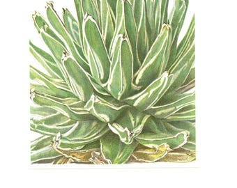 1958 Vintage succulent poster Agave Victoriae Reginae French botanical print Succulent print Plant poster Botanical art Succulent gift