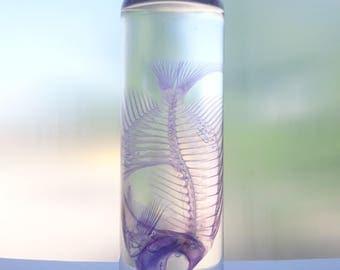 Diaphonized salt water fish taxidermy