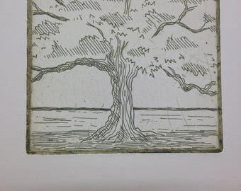 Texas Oak Tree, original print