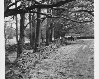 Trees, The Peak District, Sheffield Gelatin Silver Signed Black and White Art Print / Tree Photography / Peak District Woodland Photo