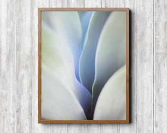 Large Abstract Print - Agave Art Print, Fine Art Print, Desert Wall Art, Boho Prints, Still Life Art, Close Up, Desert Photography