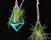 Tillandsia Air Planters 3D Printed Clearance