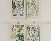 Vintage 1960's Wild Flowers Botanical Set of 4 Wall Decor Lithograph Illustration Print Book Pages