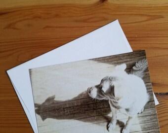 4X5.5 Postcards, Set of 4