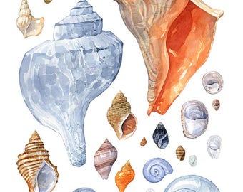 Shell art print watercolor painting, seashells beach decor, coastal wall art 11x14