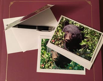Black Bear Cards (3-pk blank greeting cards)