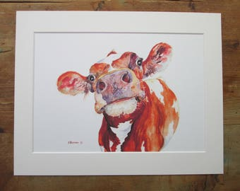 """Cow, watercolour print. Printed directly onto watercolour paper. In a  14"""" x 11"""" mount."""