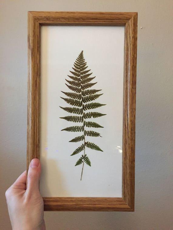 Framed Fern Art- Botanical Fern Decor - Wood Framed Fern Art- Real Pressed Botany -Vintage Framed Flower Art- Foliage Art- Floral Art Set