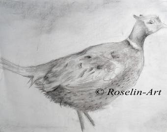 The pheasant. Charcoal drawing