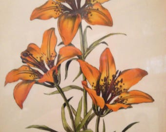 Wood Lily Mixed Media Copper Etching on Heavy Artist Cotton/Paper Titled Sign Lyman Byxbe Listed Estes Park Artist Date 2-12-1946 Denver CO