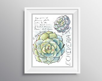 Echeveria - Physical Print of Succulent Journal Style Illustration with Notes (Multiple Sizes)