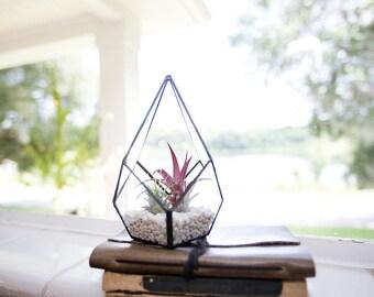 Iron & Glass Terrarium with choice of Airplant (Tillandsia)