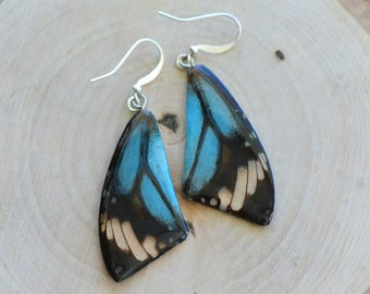 1 Pair REAL Blue Butterfly Wing Earrings Preserved in Resin - Nature Earring Insect Charm
