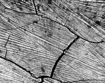 Wood Texture - Fine Art Photography