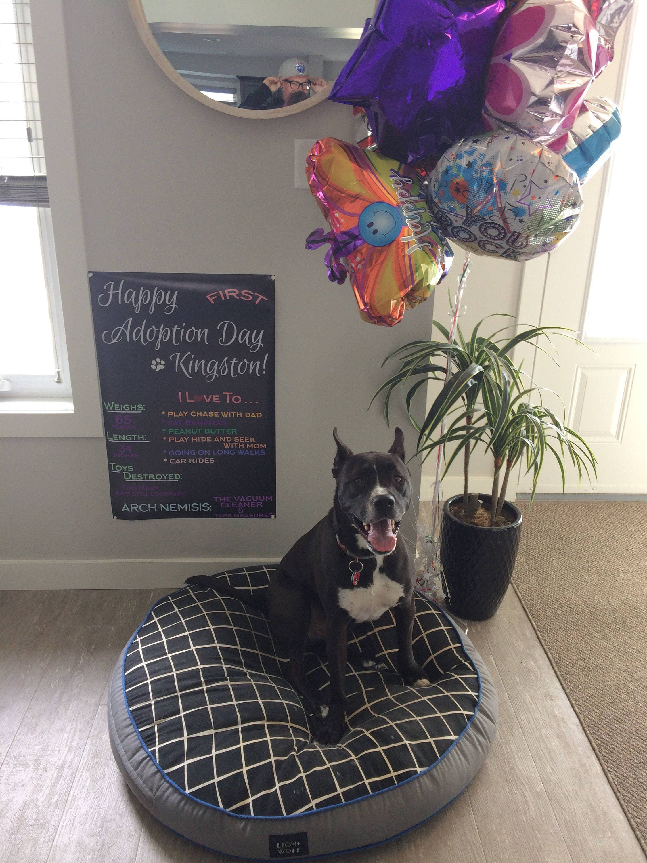 Pet Adoption Sign Happy Birthday PRINTABLE Puppy Dog Chalkboard Poster