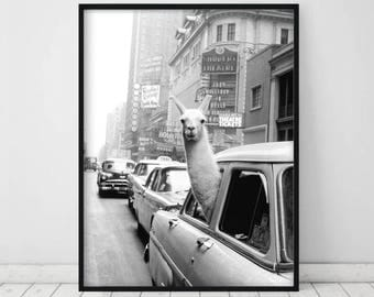 Llama in a taxi on Times Square • 1957 llama print New York City Eclectic Home Decor Black and White Art Vintage print Vintage wall art