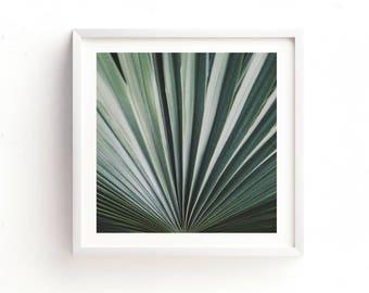 minimalist decor, palm tree frond photograph, green wall art, palm tree print, plant photo, tropical photography, nature, botanical art