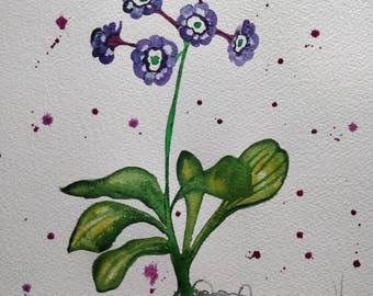 Auricula Study original watercolour painting. A4.